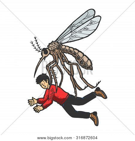 Giant Mosquito Kidnaps Human Person Color Sketch Engraving Vector Illustration. Scratch Board Style