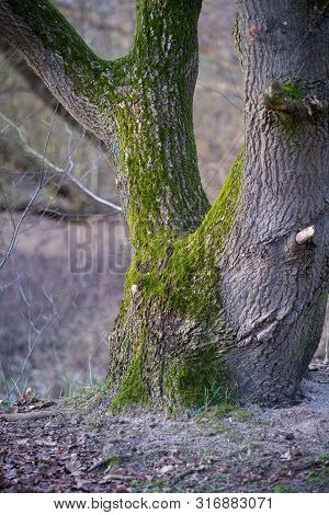 The Main Focus Is On Trees In Different Situations