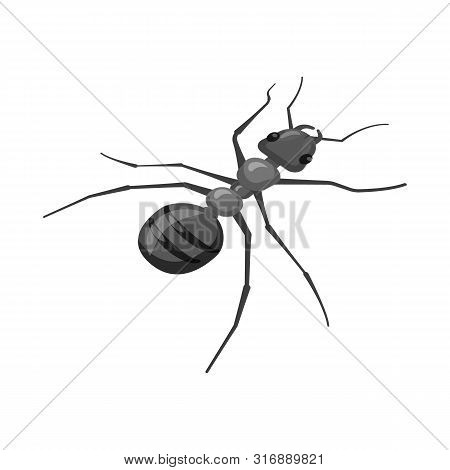 Vector Illustration Of Ant And Wild Icon. Set Of Ant And Cute Stock Symbol For Web.