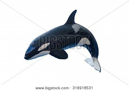 A Jumping Orca On A White Background, Isolated With Copyspace