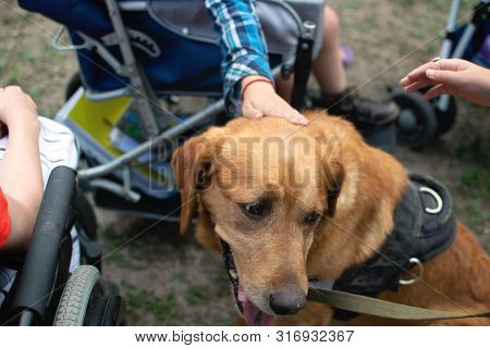 Canis Dog Therapy. Labrador Dog And Disabled Children On Green Grass. Dog-assisted Therapies And Act
