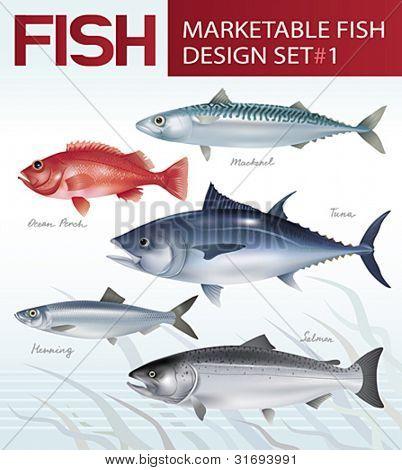 Marketable fish image design set 1. Vector illustration.