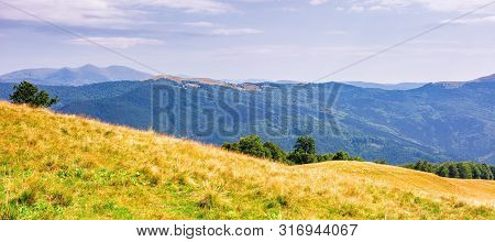 Beautiful Panorama Of A Mountain Landscape. Wonderful Summer Afternoon. Beech Trees On Grassy Meadow