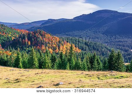 Beautiful Autumn Mountain Landscape. Forested Hill Behind The Grassy Meadow. Mixed Forest In Fall Co