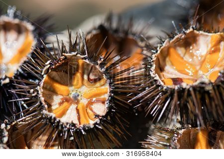 Fresh Sea Urchins, Ricci Di Mare, On A Rock, Close Up, Selective Focus. A Typical Dish Of Salento, P