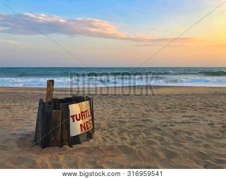Turtle Nest Eggs And Hatchlings Are Protected On The Beach, Sri Lanka