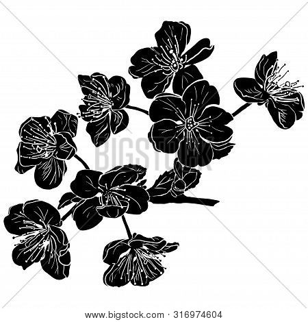 Black Apple Tree Flowers Silhouette In Beautiful Style On White Background. Summer Graphic. Vector I