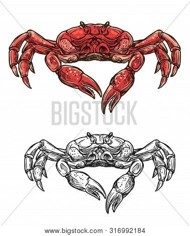 Crab Seafood Sketch Isolated Icon. Vector Marine Crustacean Symbol Of Sea Fishing Or Ocean Fisher Ca