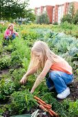 Two young girls working in vegetable garden poster