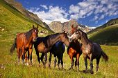 On the photo: Picturesque mountain landscape with horses poster