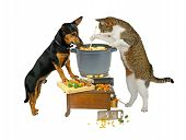 Pot Watcher. Cat and dog are cooking poster