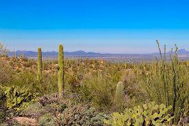 Desert Overlook On Tucson Arizona  In Saguaro National Park