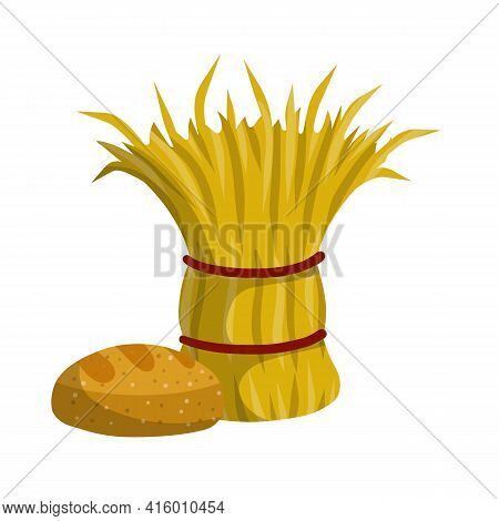 Sheaf Of Hay. Countryside Stack Of Wheat Ears. Village Harvest. Production Of Natural Food On Farm.