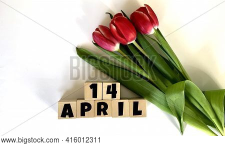 April 14.april 14 On Wooden Cubes.next To It Is A Bouquet Of Red Tulips On A White Background.calend