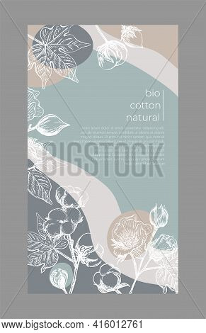 Template Card Cotton Flower. Vector Illustration Layout Template Design. Decorative Print. Poster, C