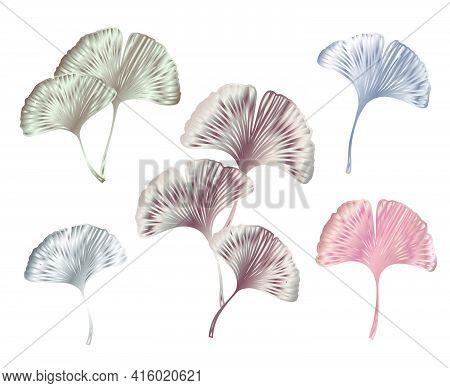 Ginkgo Or Gingko Biloba Rose Golden Leaves Set. Nature Botanical Pink Gold Vector Illustration, Deco