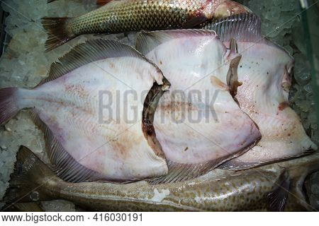 Flounder Carcasses Without A Head, Chilled On Pieces Of Ice, Sea Products, Semi-finished Products