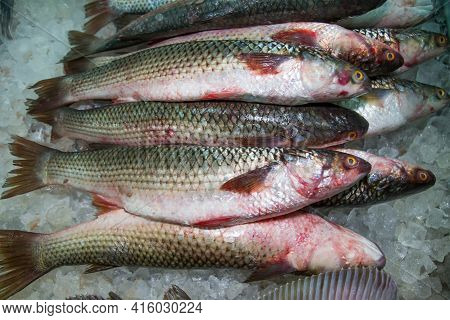 Mullet Chilled On Pieces Of Ice Vnaval, Sea Products, Semi-finished Products