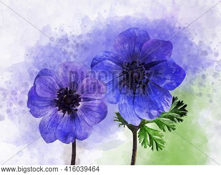 Watercolor Painting Of A Blue Anemone Flowers. Botanical Illustration.