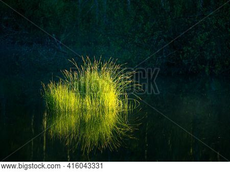 Beautiful Green Grass Growing In The Flooded Wetlands During Spring. Grass Reflections On The Water