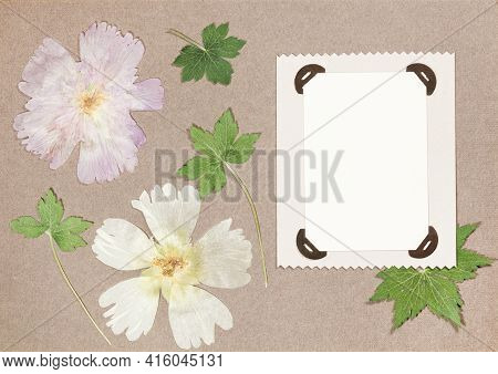 Page From An Old Photo Album. Flowers Mallow. Scrapbooking Element Decorated With Leaves, Flowers An
