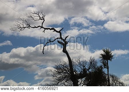 Leafless Tree In Silhouette Against Cloudy Sky
