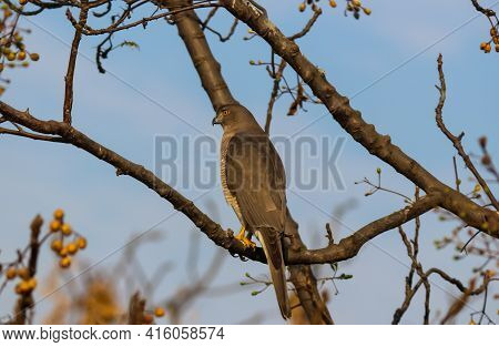 A Wild Raptor Bird Sitting On A Branch