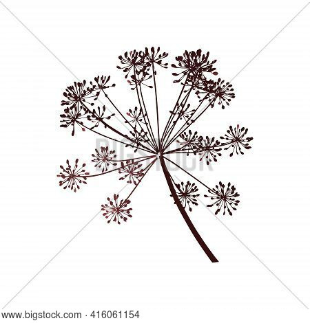One Branch Of Dill Seeds Is On A White Background, Vector Illustration
