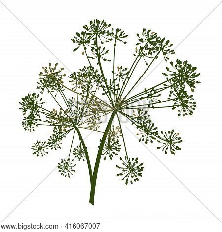 One Green Vector Branch Of Dill Seeds Is On A White Background