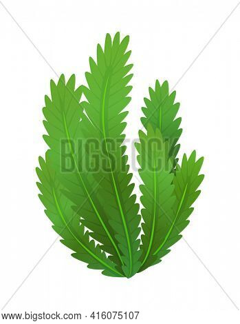 Grass or bushes. Green realistic spring grass. Fresh plants, garden botanical greens, herbs and leaves  isolated on white. Natural lawn meadow bushes, floral vegetation