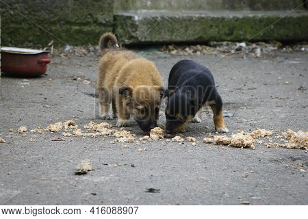 Pair, Black And Red Puppy, Homeless Dogs. Two Abandoned Puppies, Eating Porridge On The Street. Lone