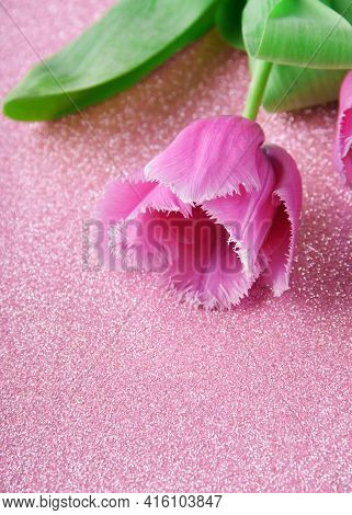 Pink Tulip With Fringe Close-up On A Pink Background With Glitter