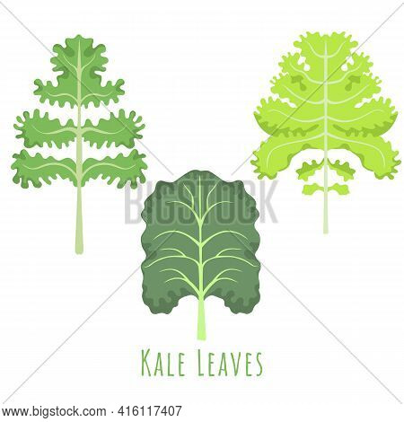 Three Isolated Different Leaves Of The Kale