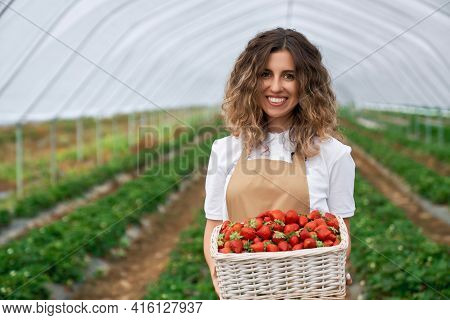 Front View Of Pretty Female Wearing Apron Holding Big Basket With Strawberries. Curly Brunette Cropp
