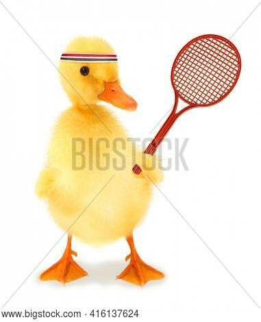 Cute cool duckling tennis player duck with racket or funny conceptual image