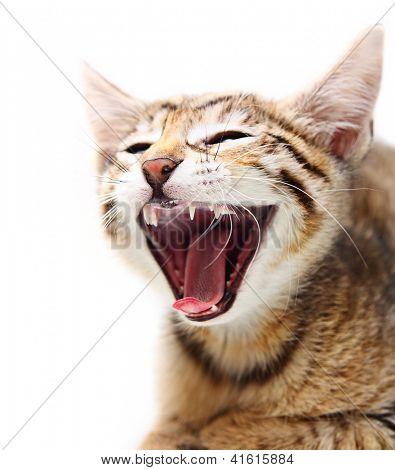 Cute happy cat.
