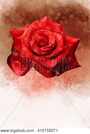 A Watercolor Drawing Of A Vibrant Red Rose Flower. Botanical Art. Decorative Element For A Greeting
