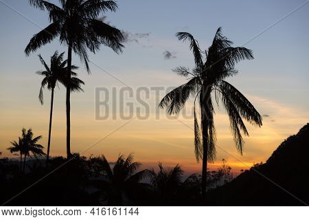 Sunset On The Cocora Valley Near Salento With Silhouettes From Giant Wax Palms, Clear Blue Sky, Colo