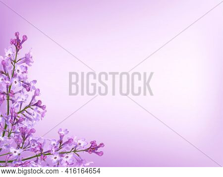 Purple Lilac Flowers Frame On Purple Background, Floral Card