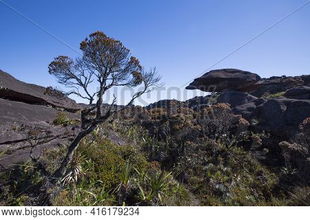 Landscape At The Top Of Mount Roraima In The Morning With Blue Sky. Strange Shaped Black Volcanic St