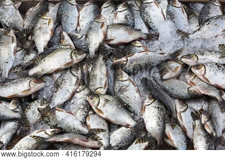 Background Of Large Group Of Fish In Ices Seen From Above At The Fish Market Of Manaus, Brazil