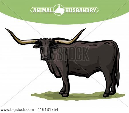 Breeding Cattle. Grazing Cow. Vector Illustration Isolated On White Background