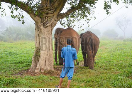 CHIANG RAI, THAILAND - JANUARY 8, 2017: A Mahout with his elephants. At the Anantara Golden Triangle Elephant Camp, a charity designed to help elephants and their handlers.