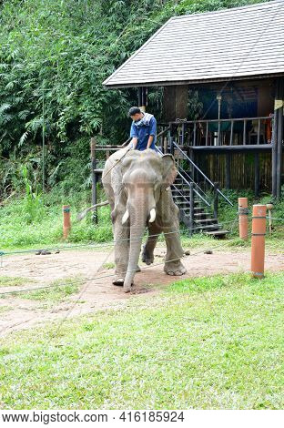 CHIANG RAI, THAILAND - JANUARY 8, 2017: A Mahout and atop his elephant. At the Anantara Golden Triangle Elephant Camp, a charity designed to help elephants and their handlers.