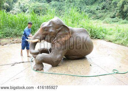 CHIANG RAI, THAILAND - JANUARY 8, 2017: Mahouts washing their elephants at the Anantara Golden Triangle Elephant Camp, a charity designed to help elephants and their handlers.