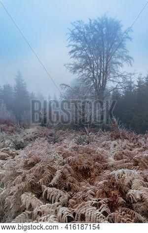 Frost bracken, Natur reserve Broumovske steny, Eastern Bohemia, Czech Republic