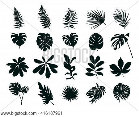 Set Of Silhouettes Of Tropical Leaves. Vector Illustration.