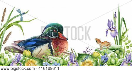Spring Wild Nature Scene. River Flowers, Carolina Duck And Small Frog Image. Watercolor Illustration