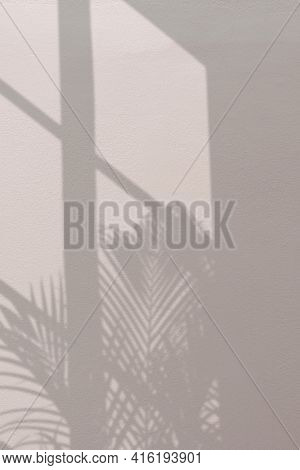 Background with palm tree and window shadow