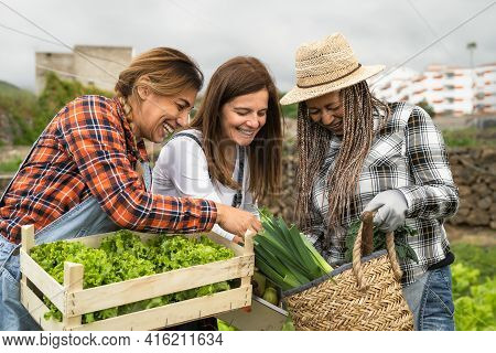 Multiracial Female Farmers Working In Countryside Holding Wooden Basket Containing Fresh Vegetables